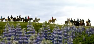 exkurze na koni