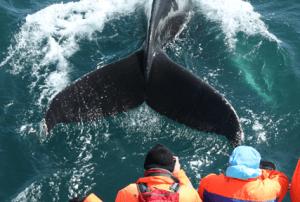 exkurze na velryby