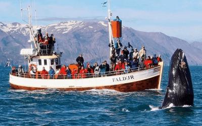 Velryby z Húsavíku
