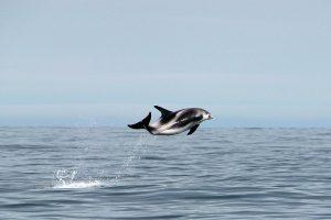 delfin-Island