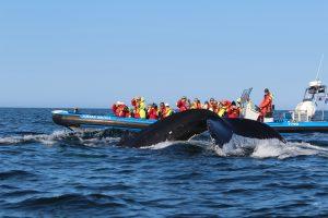 výlet-velryby-husavík