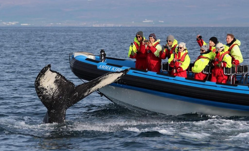 Pozorování velryb na zodiaku