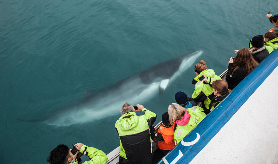 Pozorování velryb z lodi na Islandu