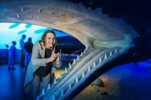 Muzeum velryb v Reykjaviku
