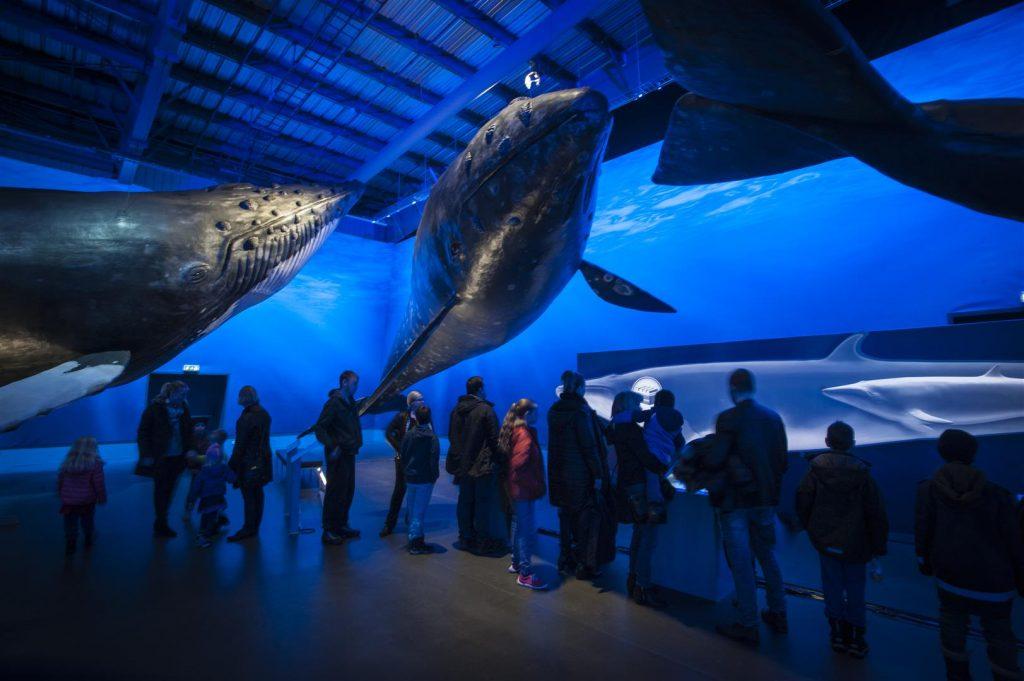 Muzeum velryb Island