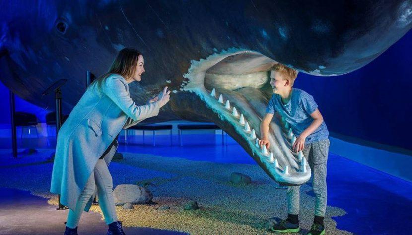 Muzeum velryb