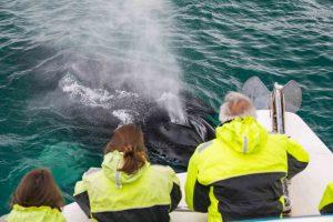 Pozorování velryb z člunu zodiac