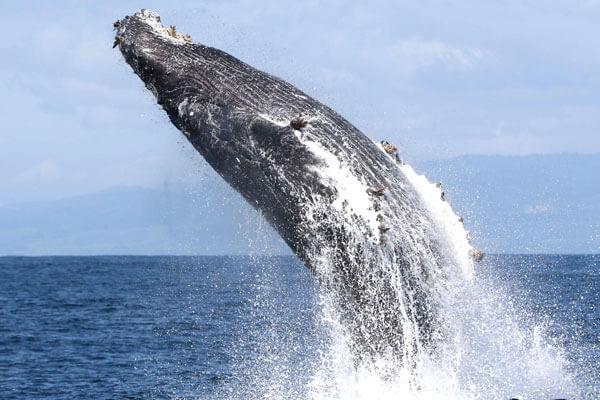 Exkurze na velryby na Islandu