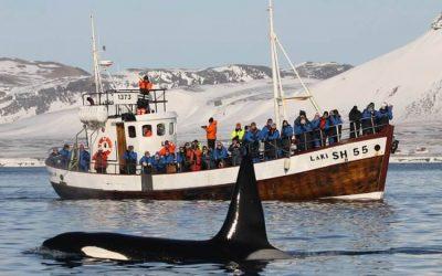 Velryby a kosatky z Ólafsvíku