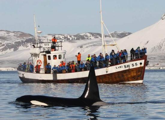 Pozorování velryb s přístavu Olafsvík