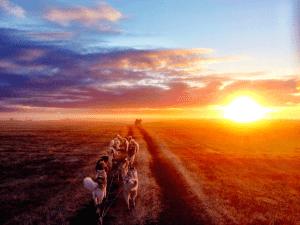Exkurze na psím spřežením v létě