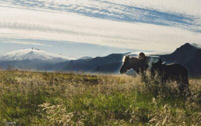 Jízda na koni – Snaefellsnes