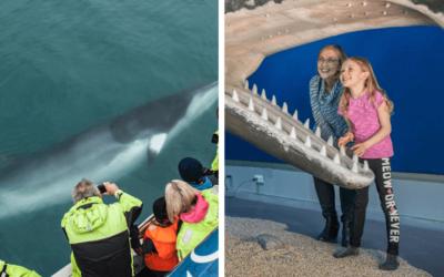 Pozorování velryb s návštěvou muzea