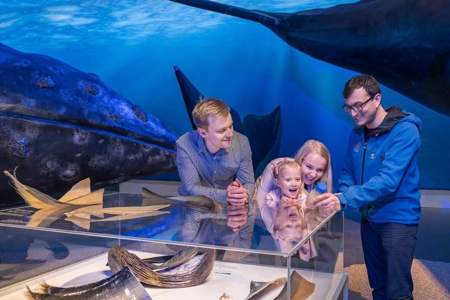 Muzeum velryb na Islandu